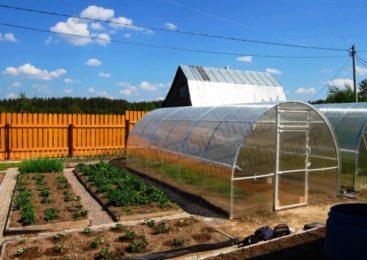 Где лучше поставить теплицу на садовом участке ?